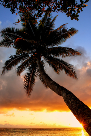 Leaning palm tree at sunrise in Lavena village on Taveuni Island, Fiji. Taveuni is the third largest island in Fiji.