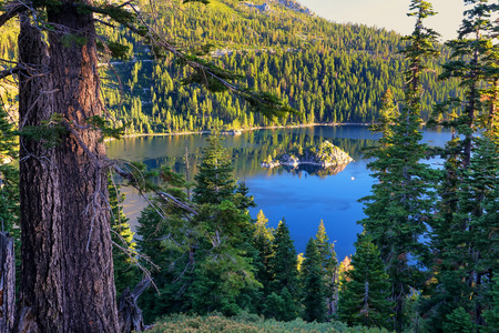 fannette: Pine forest surrounding Emerald Bay at Lake Tahoe, California, USA. Lake Tahoe is the largest alpine lake in North America Stock Photo