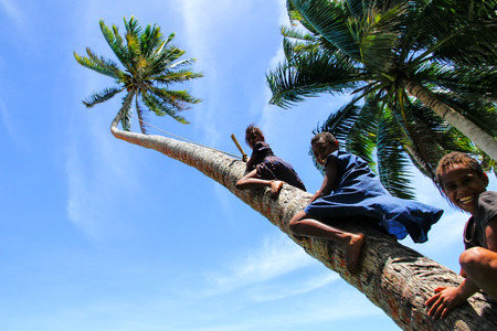 Local kids climbing palm tree to swing on a rope swing in Lavena village, Taveuni Island, Fiji. Taveuni is the third largest island in Fiji.