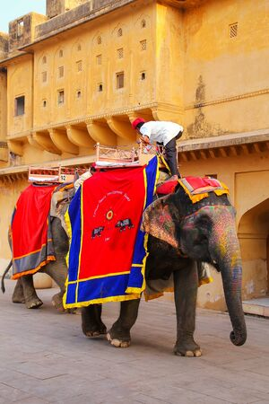 mahout: Decorated elephants walking in Jaleb Chowk (main courtyard) in Amber Fort, Rajasthan, India. Elephant rides are popular tourist attraction in Amber Fort.