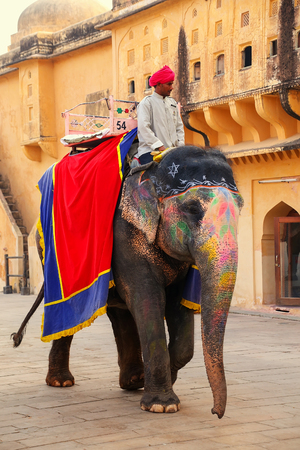 mahout: Decorated elephant walking in Jaleb Chowk (main courtyard) in Amber Fort, Rajasthan, India. Elephant rides are popular tourist attraction in Amber Fort.