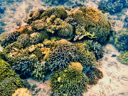 nusa: Coral reef in Komodo National Park, Flores Sea, Nusa Tenggara, Indonesia.  Komodo islands is also a part of the Coral Triangle, which contains one of the richest marine biodiversity on earth.