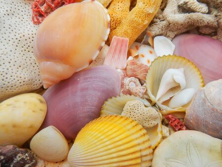 hard coral: Colorful seashells and dead hard coral on a beach Stock Photo