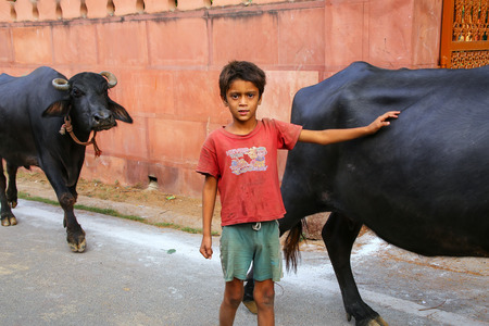 Local boy walking with water buffalo outside of Taj Mahal complex in Agra, Uttar Pradesh, India. Agra is one of the most populous cities in Uttar Pradesh