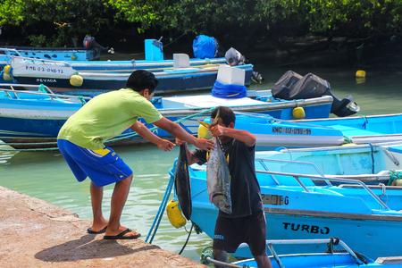 Local man unloading tuna at the fish market at Puerto Ayora, Santa Cruz Island in Galapagos, Ecuador. Puerto Ayora is the most populous town in the Galapagos Islands.