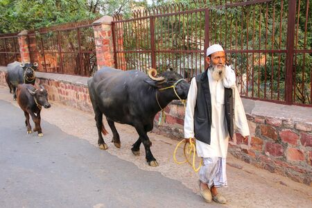 Local man walking with water buffalo in the street of Fatehpur Sikri, Uttar Pradesh, India. The city was founded in 1569 by the Mughal Emperor Akbar, and served as the capital of the Mughal Empire from 1571 to 1585