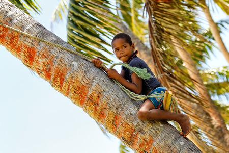 Local boy climbing palm tree to swing on a rope swing in Lavena village, Taveuni Island, Fiji. Taveuni is the third largest island in Fiji. Editorial