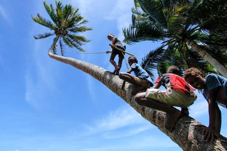 Local kids climbing palm tree to swing on a rope swing in Lavena village, Taveuni Island, Fiji. Taveuni is the third largest island in Fiji.