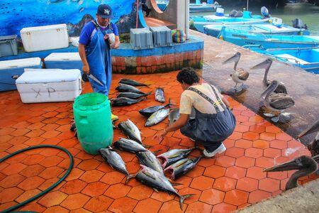 Local men cutting fish at the market in Puerto Ayora on Santa Cruz Island, Galapagos National Park, Ecuador. Puerto Ayora is the most populous town in the Galapagos Islands.