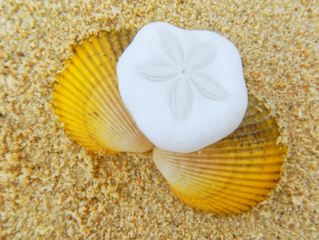 Close-up of sand dollar and shell lying on the beach Stock Photo
