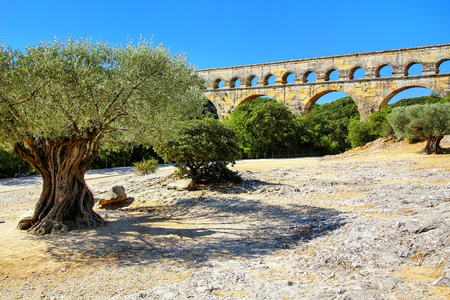 Old olive trees growing near Pont du Gard, southern France. It is the highest of all elevated Roman aqueducts. Stock Photo