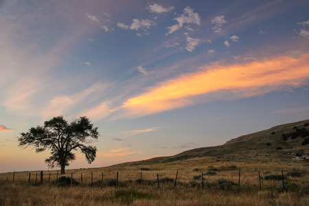 Lone tree at sunrise, North Platte River valley, western Nebraska, USA Stock Photo
