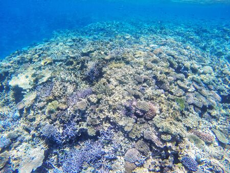 Coral reef off the coast of Gee island in Ouvea lagoon, Loyalty Islands, New Caledonia.
