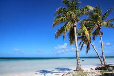 Palm trees on the coast of Ouvea lagoon on Ouvea Island, Loyalty Islands, New Caledonia. Stok Fotoğraf