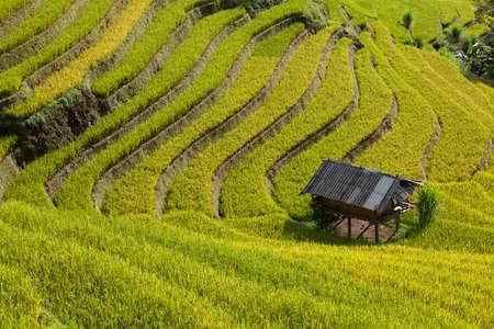 rice terrace: Sapa Rice Terrace