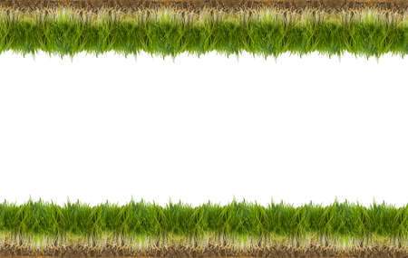 isolation backdrop: green grass isolated on white background Stock Photo