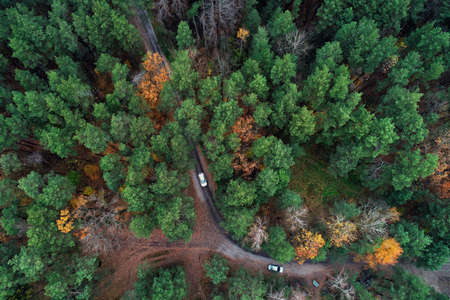 road with a car in green autumn pine-trees forest