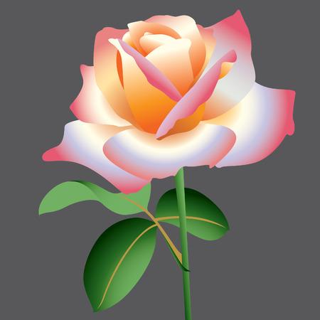 pink vector rose Vector