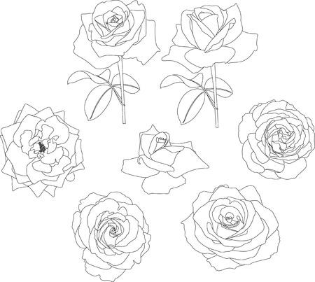 contour: roses contour Illustration