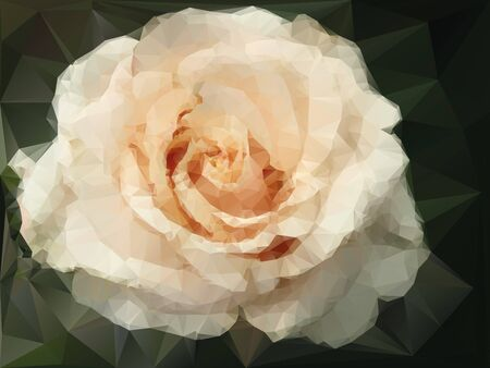 rose blanche: rose blanche fond Illustration