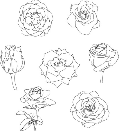 contour: roses contour Illustration