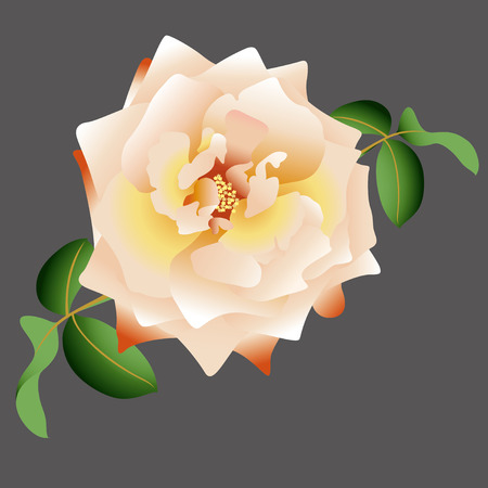 rose blanche: