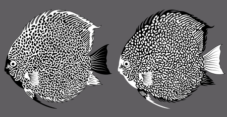 discus fish: vector aquarium fish discus Illustration