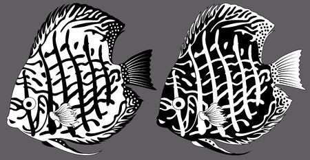 vector aquarium fish discus Illustration