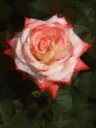 rose blanche: blanc rouge et de rose fond