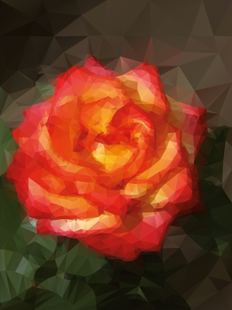 yellow rose: red and yellow rose background Illustration