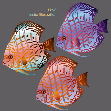 vector aquarium fish discus Vector
