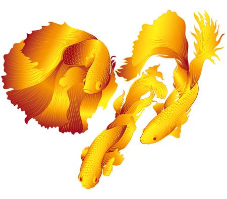 koi: vector aquarium fish