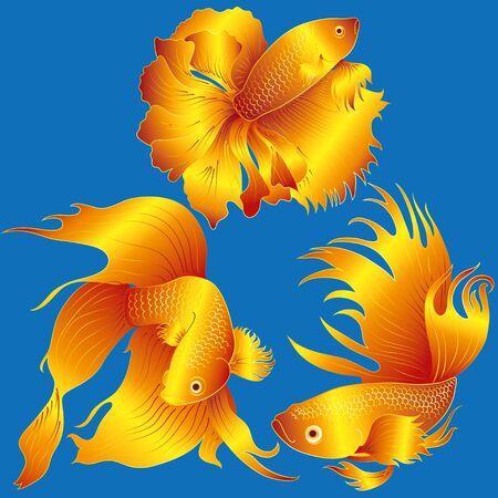 poisson aquarium: poissons d'aquarium vecteur