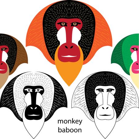 baboon: monkey baboon