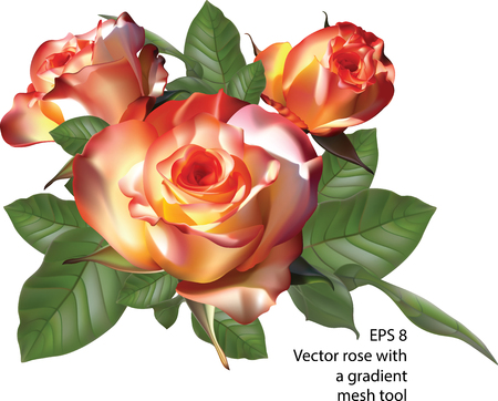 fresh flowers: Vector roses with a gradient mesh tool