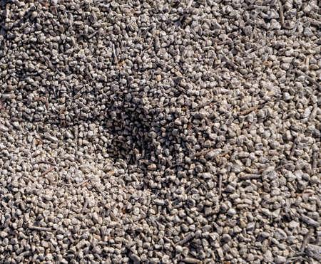 Ant Mound Sand