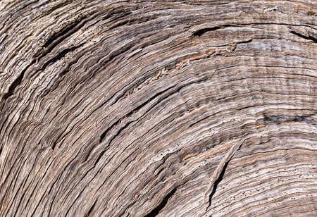 driftwood: Curved Driftwood Texture