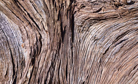ジュニパーの木の樹皮を風化します。 写真素材