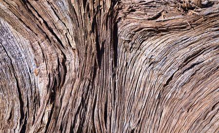juniper: Weathered Juniper Tree Bark