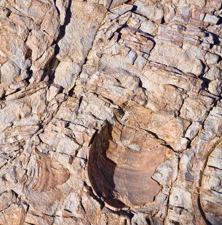 Fossil Shell Impression Фото со стока