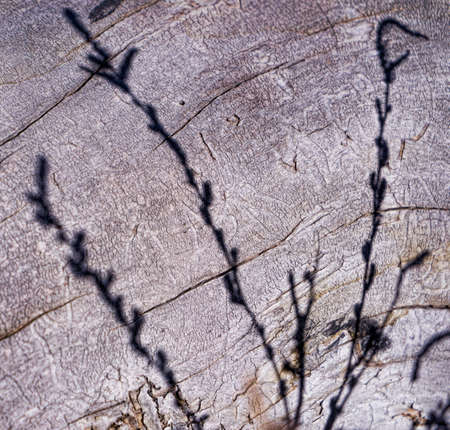 tree stump: Tree Stump And Grass Shadow