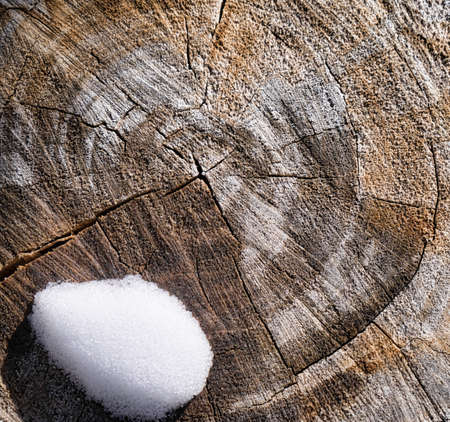 Tree Stump And Snow