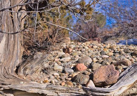 enebro: Las rocas y viejo del enebro
