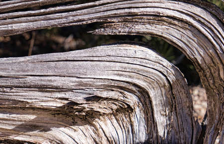 Curved Driftwood Texture