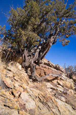 rock layers: Rock Outcropping Geology