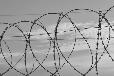 Barbed wire against a blue sky with feathery clouds. Close-up photo. Black and white photo.