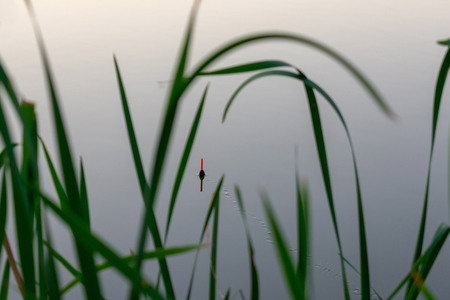 morning or evening fishing on the river. fishing float in the reeds. rest and relaxation in nature, an interesting hobby.