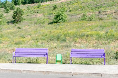 two purple benches in a public Park under the open sky. summer photo in the background a lot of green grass and plants.