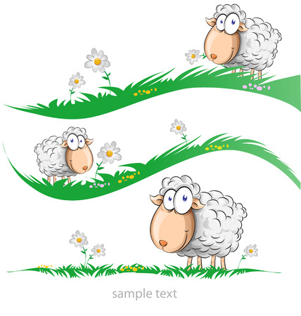 sheep cartoon set on meadow isolated