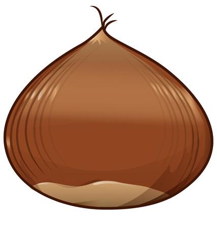 castaÑas: castaña aislado en el fondo blanco